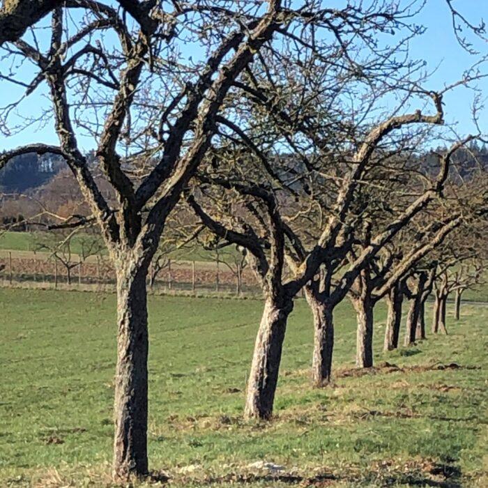 Fruit tree sponsorships wanted!